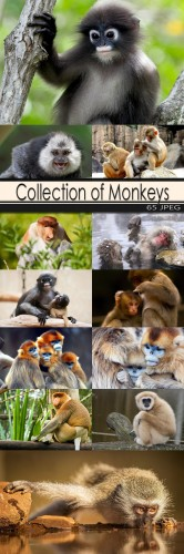 Collection of Monkeys