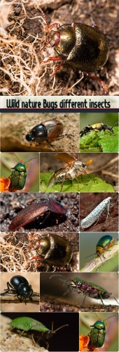 Wild nature Bugs different insects