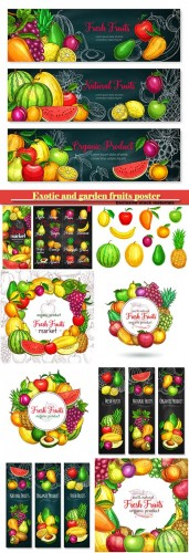 Exotic and garden fruits poster of melon, apricot or apple and avocado, tropical mango, kiwi